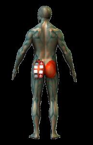 farizmok edzése elektróda pozíciók