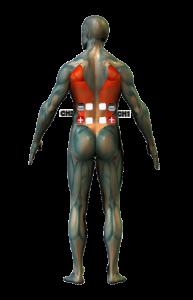 deréktáj kezelés elektróda pozíciók