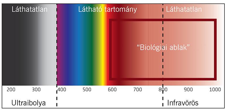 fény spektrum és biológiai ablak lágylézer kezeléshez